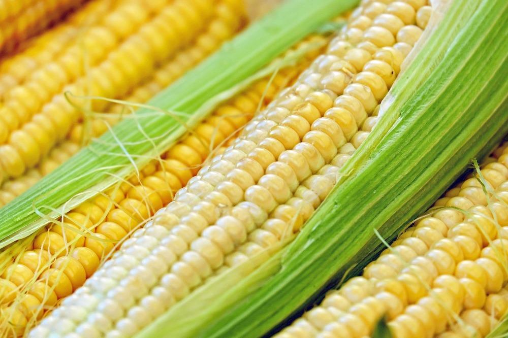 corn-1605664_1920